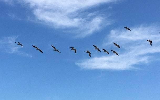 Отдых на море 2021: Бирючий остров