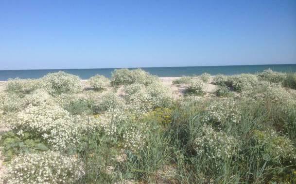 Остров Бирючий – период цветения