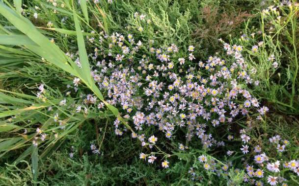Острів Бірючий - період цвітіння