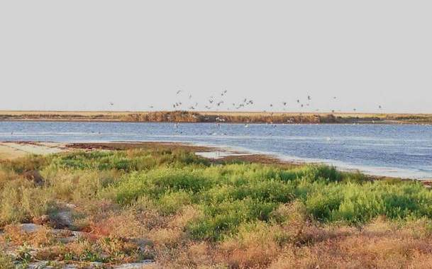 Золотой берег Бирючий