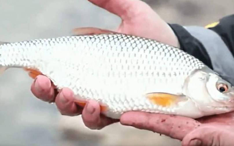 Риболовля на Азовському морі